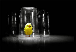 duck by kawsek