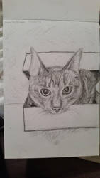 Cat in box by macaronisheep