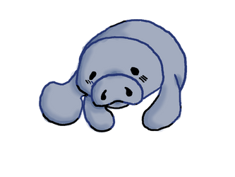 Manatee by MagicalRave
