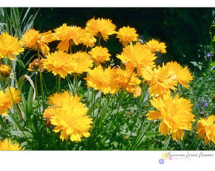 SummerForestFlowers 1 by love1008