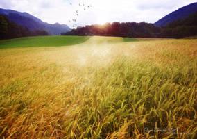 June Dream Field by love1008