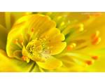 Spiral flower 4 by love1008