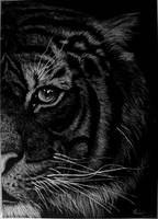 Tiger by Malenarosa