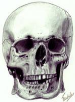 Skull by FredsterNL