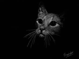 Katz7 by FredsterNL