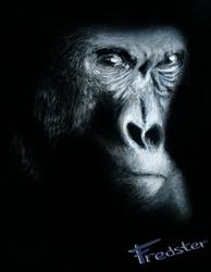 Gorilla by FredsterNL