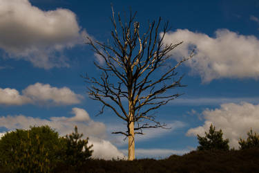 Reaching for the Sky by FredsterNL