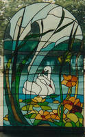 Swans behind the window. by jostrartat