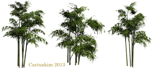 Bamboo PNGs_Rendered by Cactuskim by cactuskim