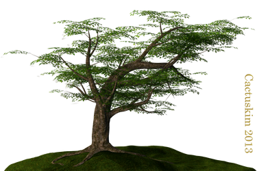 Tree on the Hill_PNG_KL by cactuskim