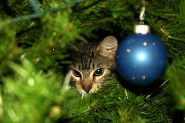 Cat in the Christmas Tree by Bigdogkiller