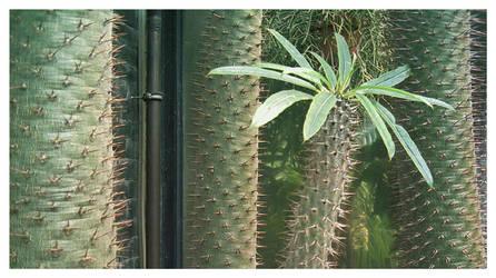 cactus 01 by Bowie-Spawan