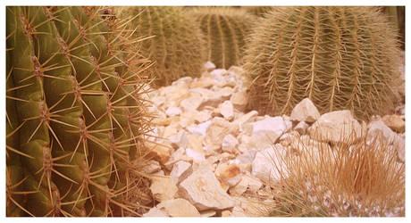 cactus 03 by Bowie-Spawan