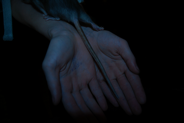hands and rats by Simpelway