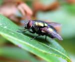 Fly by Avahlon-Stock