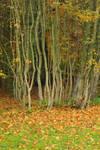 Autumn 22 by Avahlon-Stock