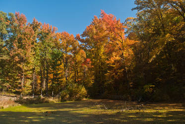 Fall Colors by rwlux83