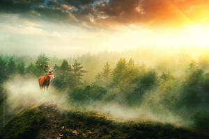 Evening mist by lady-amarillis