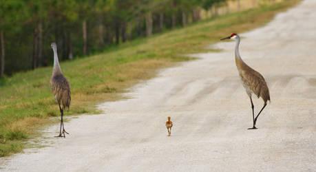Hey. . . wait for me by AdARDurden