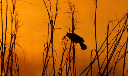 .:. The Early Bird Gets The. . . .:. by AdARDurden