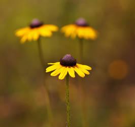 Summer Wildflowers in Florida by AdARDurden