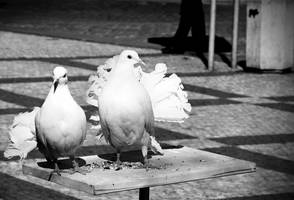 doves by slownumbers