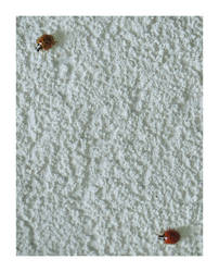 ladybirds by slownumbers