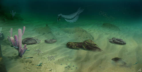 Cambrian by pakozoic