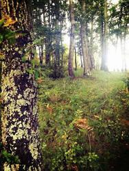 trees by TragacNox