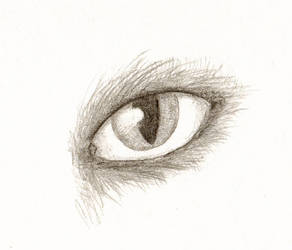 Anthro eye sketch by originalclosetnerd