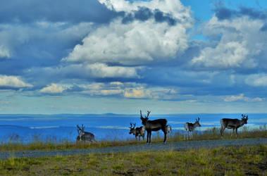Beauty of Lapland by Denierim