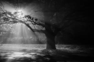 foggy night by dzorma