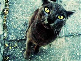 meow. by hnji