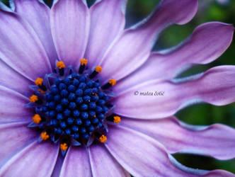 flower. by hnji