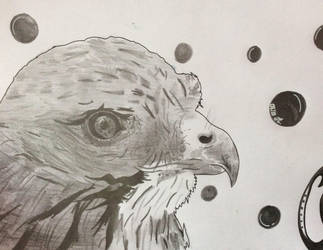 Eagle by Cat-Anna