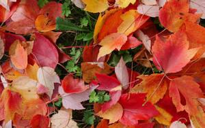 Fall Colors by Krannichfeld