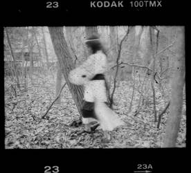 In the Woods No. 4 by sedge