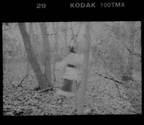 In the Woods No. 7 by sedge