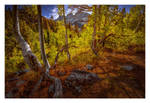 Aspen Grove by EtherealSceneries
