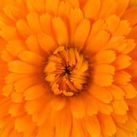 Orange by BlackEyesSnowAngel