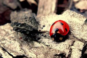 little red by BlackEyesSnowAngel