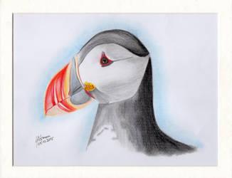 Atlantic puffin by BlackEyesSnowAngel