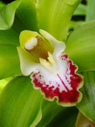 green Orchid by BlackEyesSnowAngel