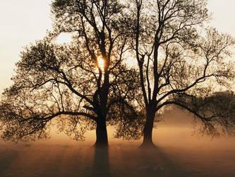 Tree by Plori