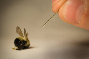 Bumblebee by danlev