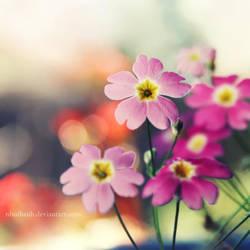 Blooming Spring by ntpdang