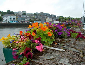 Flowers of Kinsale, Ireland by LiverpoolStacy