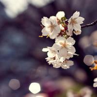 dreamy by lia-minou