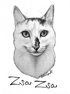 Zsa Zsa portrait by HollieBollie