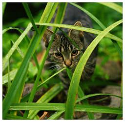 Dix w trawie by Gosia-kill